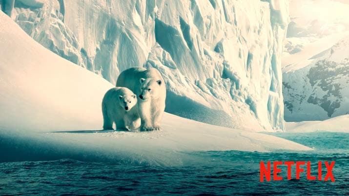 Netflix pone en abierto sus documentales Our Planet